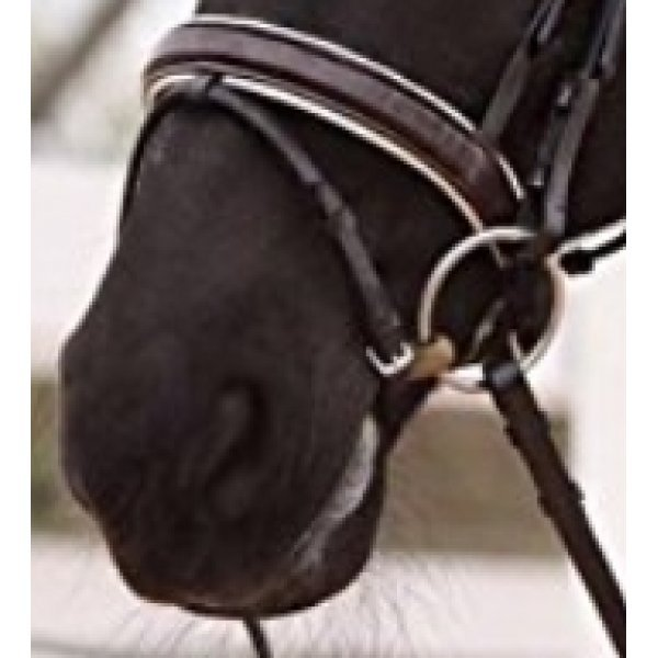 Trensenzaum mit engl. Reithalfter von DMS,  Lederstirnband und Nasenriemen mit weicher weissser Polsterung unterlegt