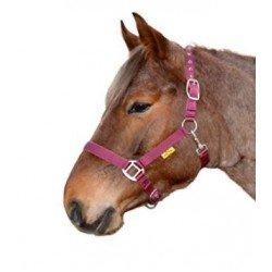 HALFTER mit Karabinerhaken von Horse Harmony, weich unterlegt, Stallhalfter, Weidehalfter, Treansporthalfter, sehr robust, hohe Qualität in bordeaux